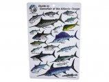 Guide, Caribbean Game Fish ID Card