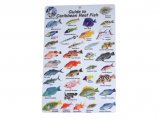 Guide, Caribbean Reef Fish ID Card