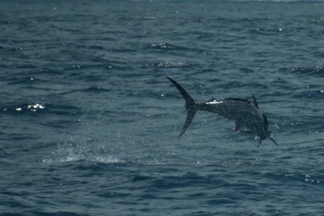 FISH ON! 36
