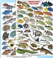 Guide, Fish Watcher's ID Card Waterproof