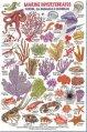 Guide, Invertebrates & Coral ID Card Waterproof